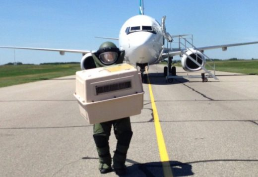 A bomb squad member takes cats from a WestJet flight diverted by bomb threat.