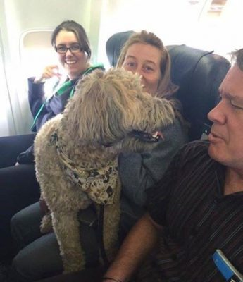 Pets were allowed on board evacuation flights.